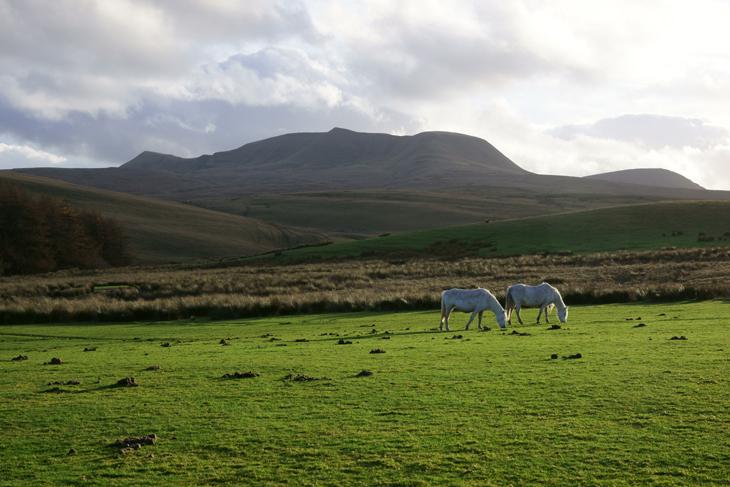 Foel Darw, by Ian Glendenning